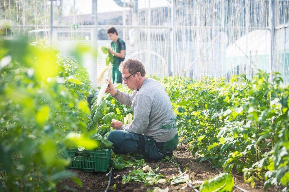 Gärtnerei Witzberg: Gärtnerei, Gemüsebau und Gartenunterhalt