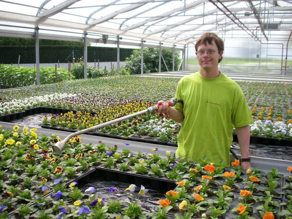 Zum Grünen Martin (Gärtnerei + Blumen·laden)