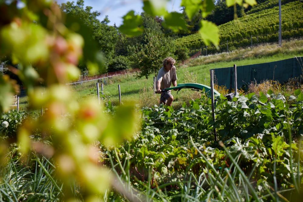 Gärtner im Gemüseanbau und im Park (80-100%)